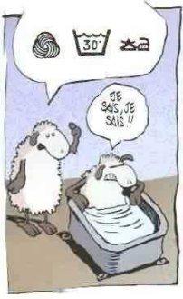 Bd_mouton