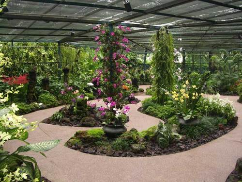 Malaisie et Singapour: Jardin des Orchidées
